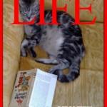 Vita da gatto 2